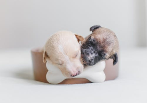 Two Puppies Lying on Bed
