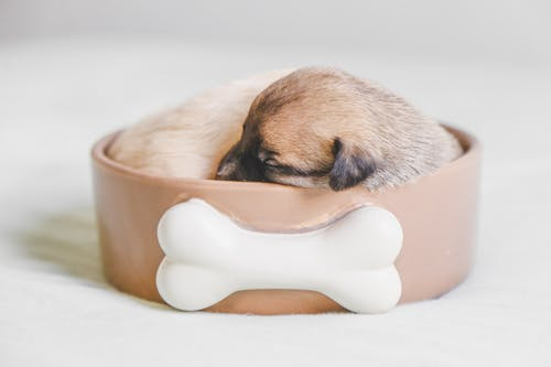 Puppy Sleeping in a Pet Bowl