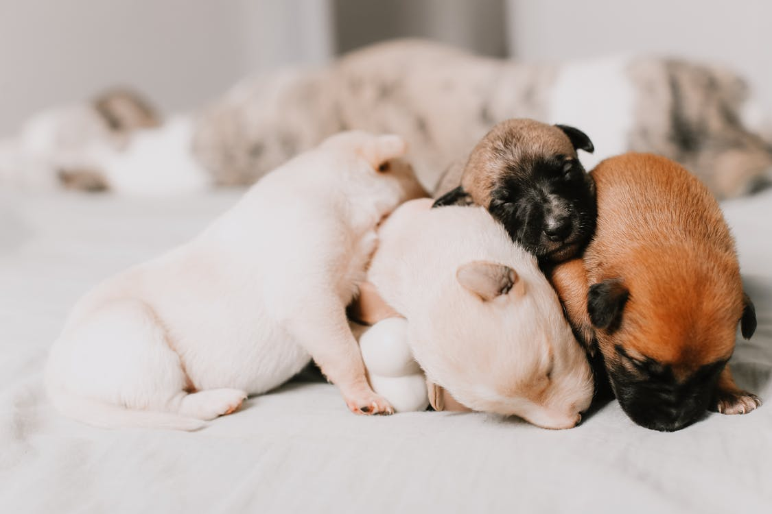 Close-up Of Four Assorted-Color Puppies Sleeping Close Together