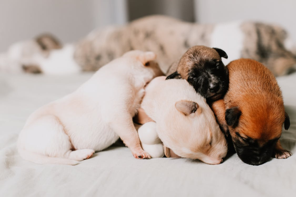 Close-up Of Four Puppies Sleeping Tightly Together
