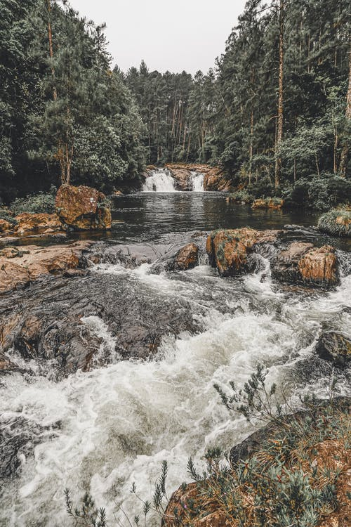 Trees Surrounding A Rocky River With Rapids