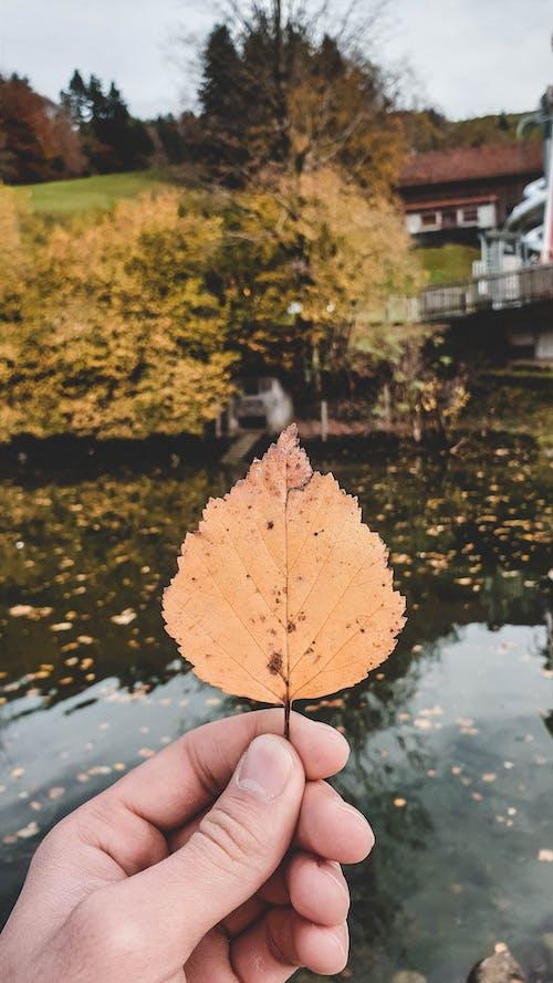 Бесплатное стоковое фото с лист, осень, природа