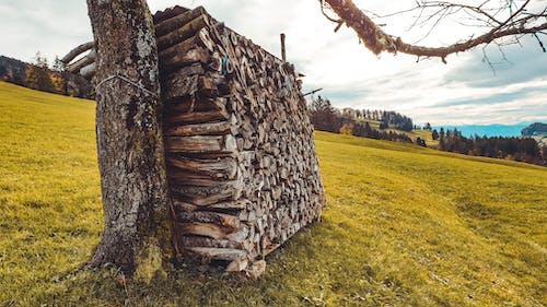 Бесплатное стоковое фото с дерево, осень, природа