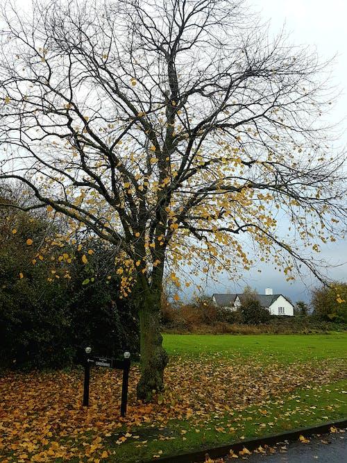 Kostenloses Stock Foto zu gefallene blätter, graue himmel, grüne büsche, grünes gras