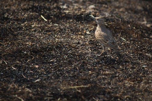 คลังภาพถ่ายฟรี ของ นก