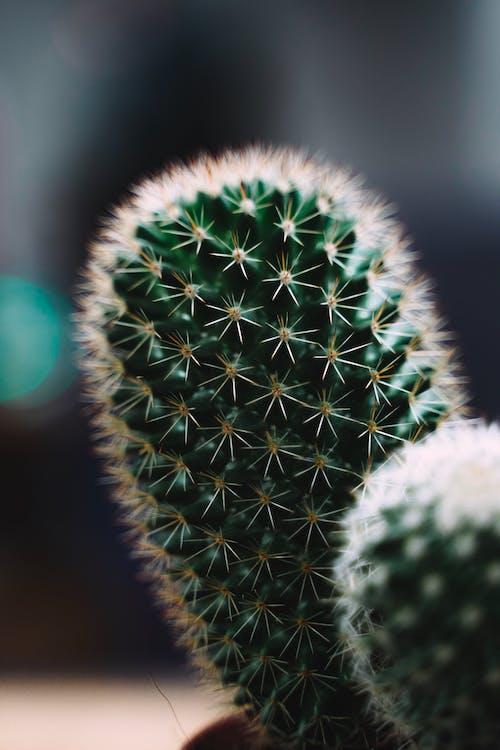 Macro Photo Of Green Cactus Plant