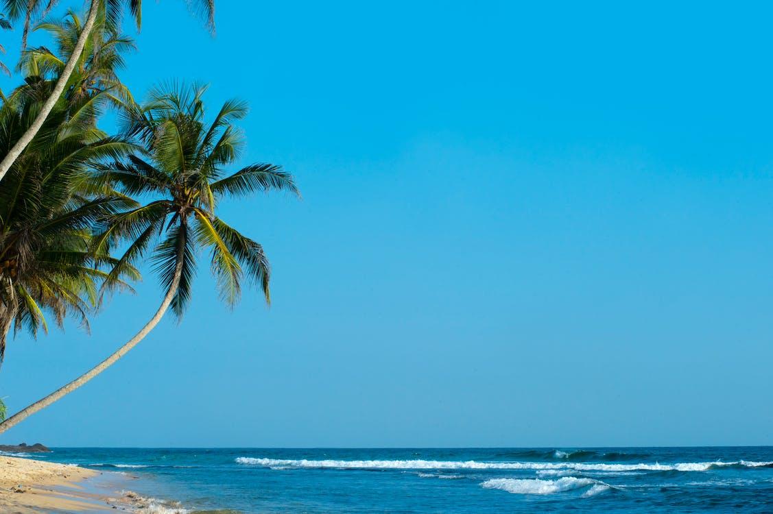 Palm Tree Facing Sea