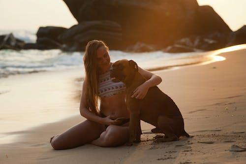Kostnadsfri bild av djur, flicka, gryning, hav
