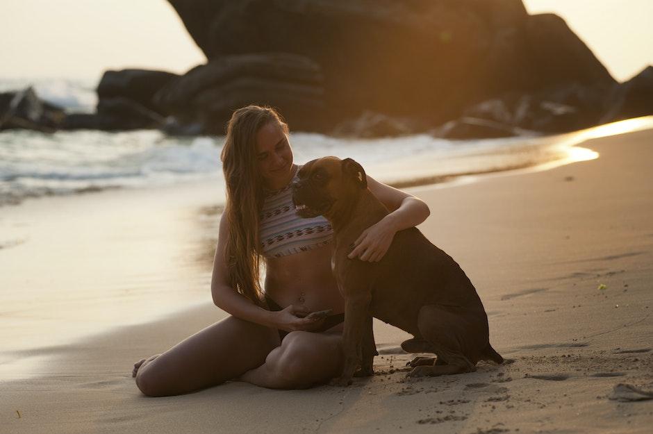 adult, animal, beach