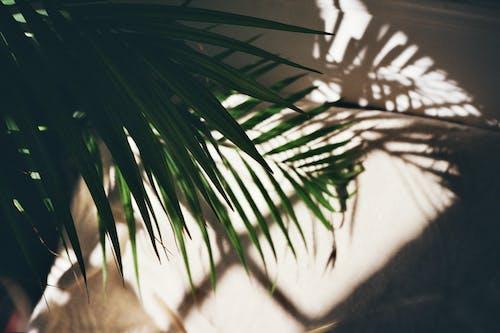 Ingyenes stockfotó árnyék, fény, levél, napfény témában