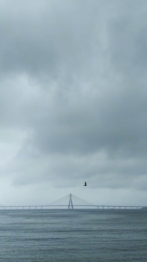 Free stock photo of birds, blue sea, mumbai