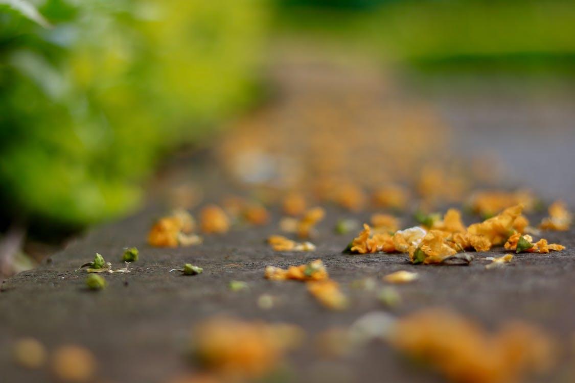 carport, conduir camí, flors