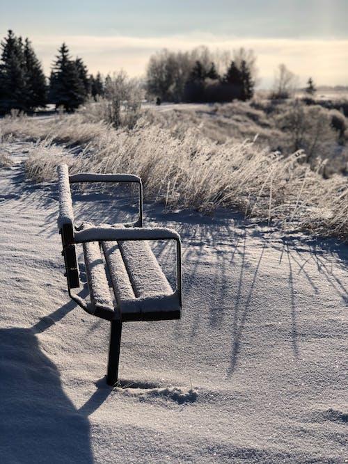 Imagine de stoc gratuită din bancă, bancă din parc, iarnă, iarna în calgary