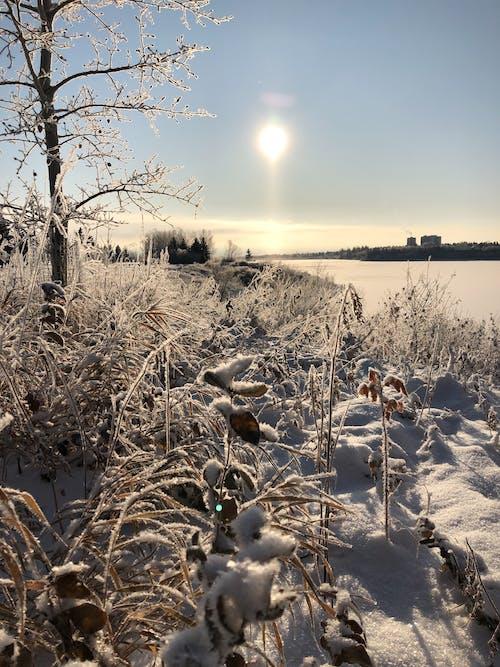 Imagine de stoc gratuită din gheață, gheata pe plante, iarnă, zăpadă