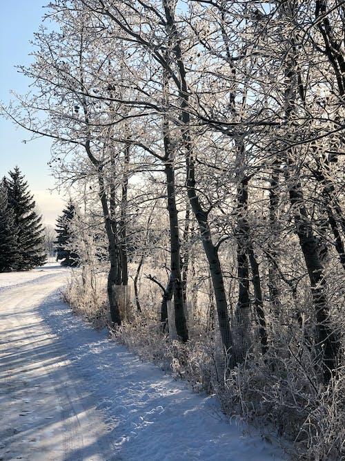 Imagine de stoc gratuită din fundal de iarnă, gheață, iarnă, zăpadă