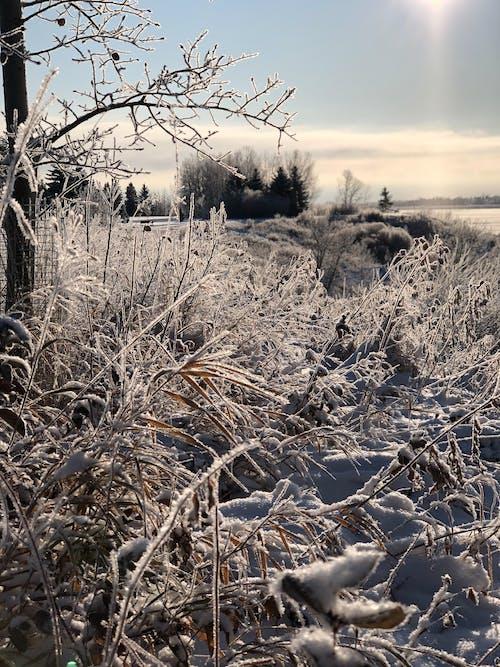 Imagine de stoc gratuită din gheață, iarnă, zăpadă