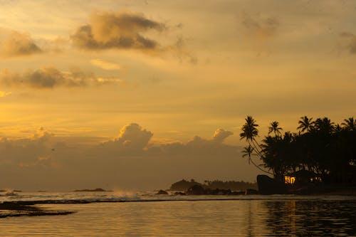 Foto profissional grátis de água, alvorecer, árvores, beira-mar