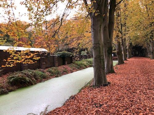Gratis stockfoto met herfst, herfstbladeren, herfstkleuren