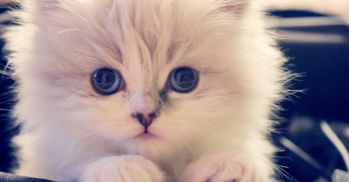 Картинки милого котенка с голубыми глазами, мой