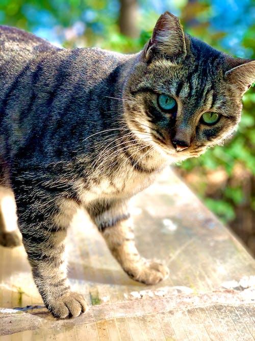 Безкоштовне стокове фото на тему «Деревина, кішка, осінь»