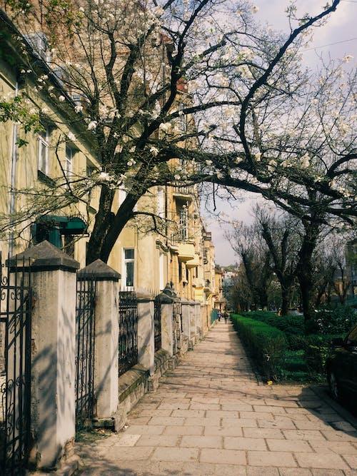 #çiçek açmak, #sokak, #spring, #taze içeren Ücretsiz stok fotoğraf