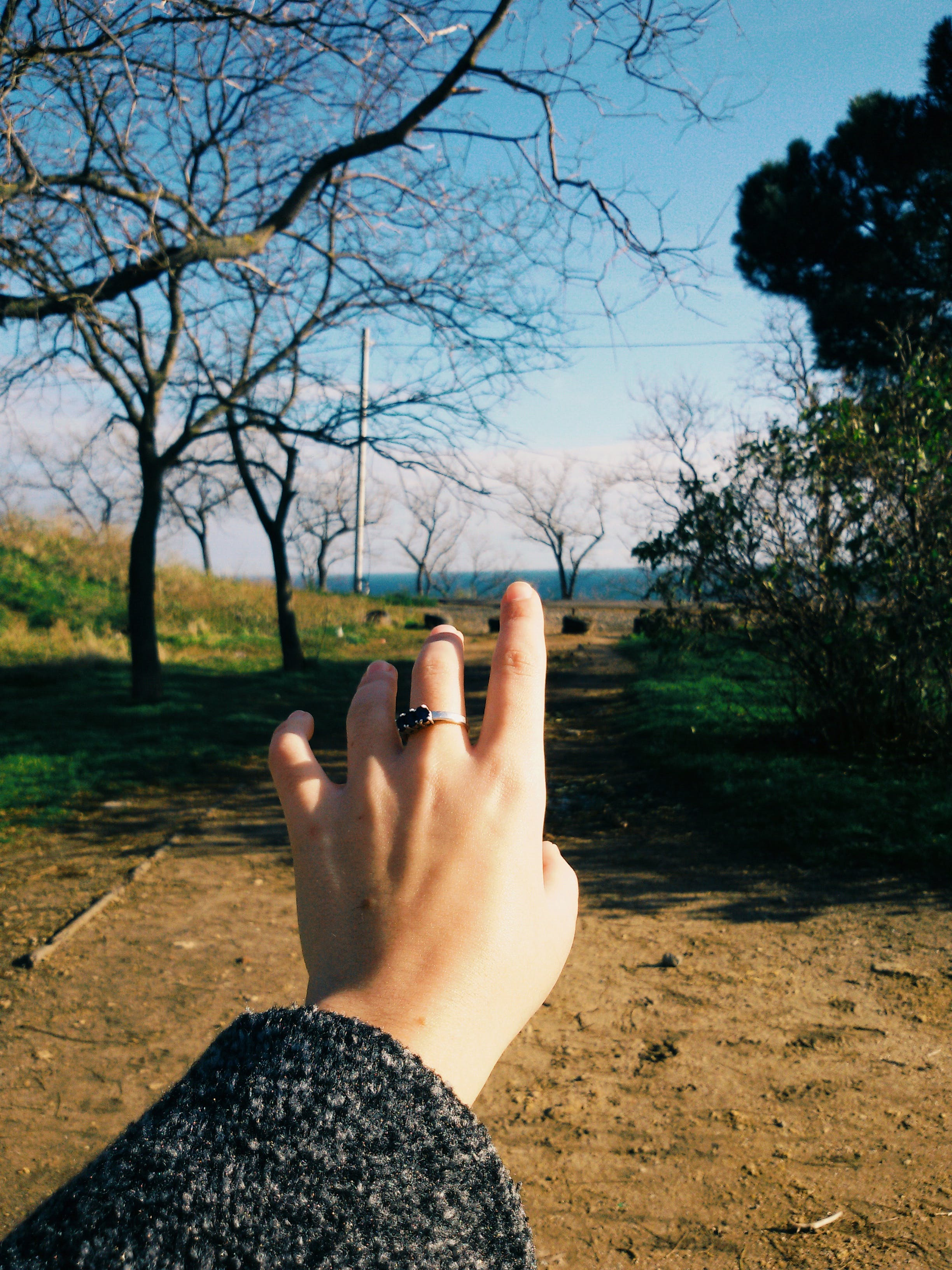Woman Hand on Bare Tree Against Sky