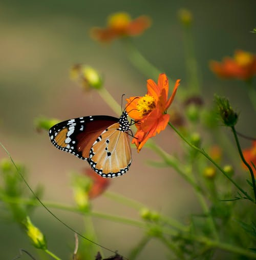 Free stock photo of beauty in nature, butterfly, butterfly on a flower