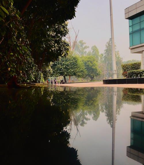 Immagine gratuita di bellezza nella natura, natura, riflessi di luce, riflessivo