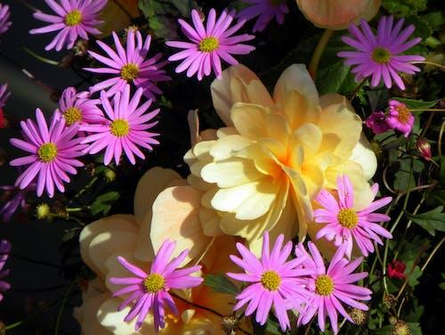 Immagine gratuita di aiuola, fiori, fiori. flora, letto di fiori