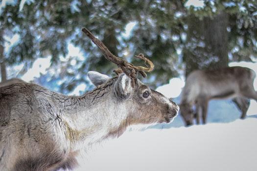 Free stock photo of snow, nature, winter, animal