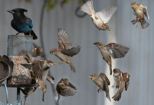 Imagine de stoc gratuită din compozit, hrănitoare de păsări, păsări