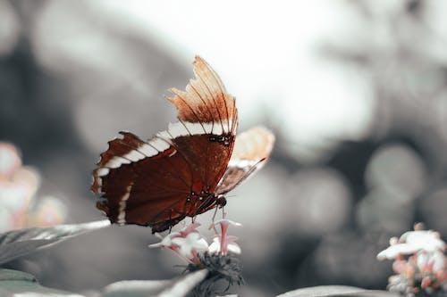 ナチュラル, バタフライ, 自然の美しさ, 花と蝶の無料の写真素材