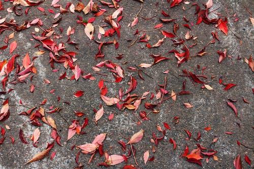 Foto profissional grátis de asfalto, cores de outono, cores do outono, declínio