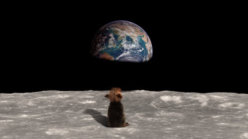 Free stock photo of dog, earth, moon, puppy