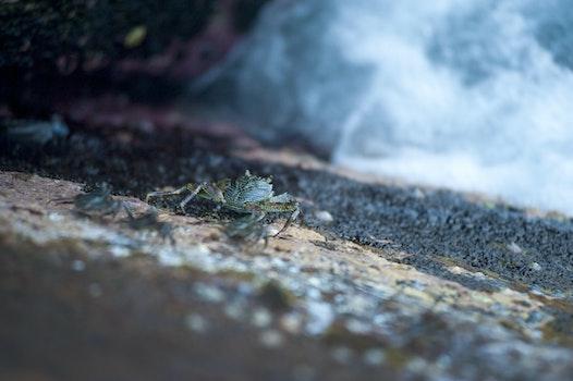 Free stock photo of crab, outdoors, macro, wildlife
