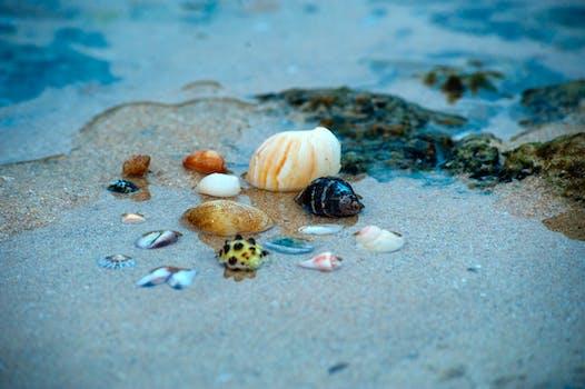 Pile Of Beige Seashells Near Seashore 183 Free Stock Photo