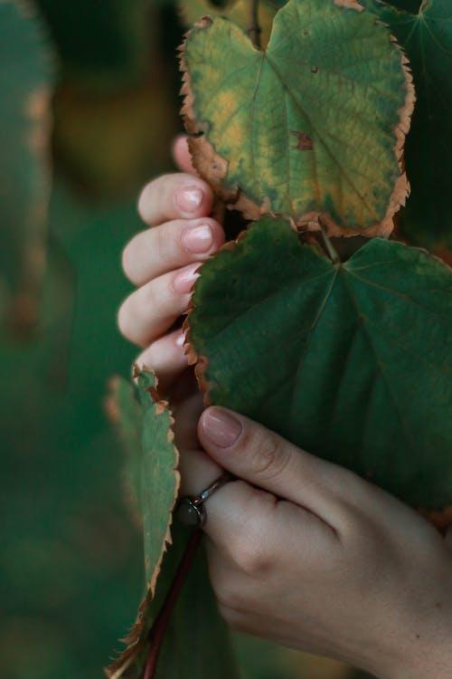 Imagine de stoc gratuită din frunză, frunze de toamnă, inel, mâini