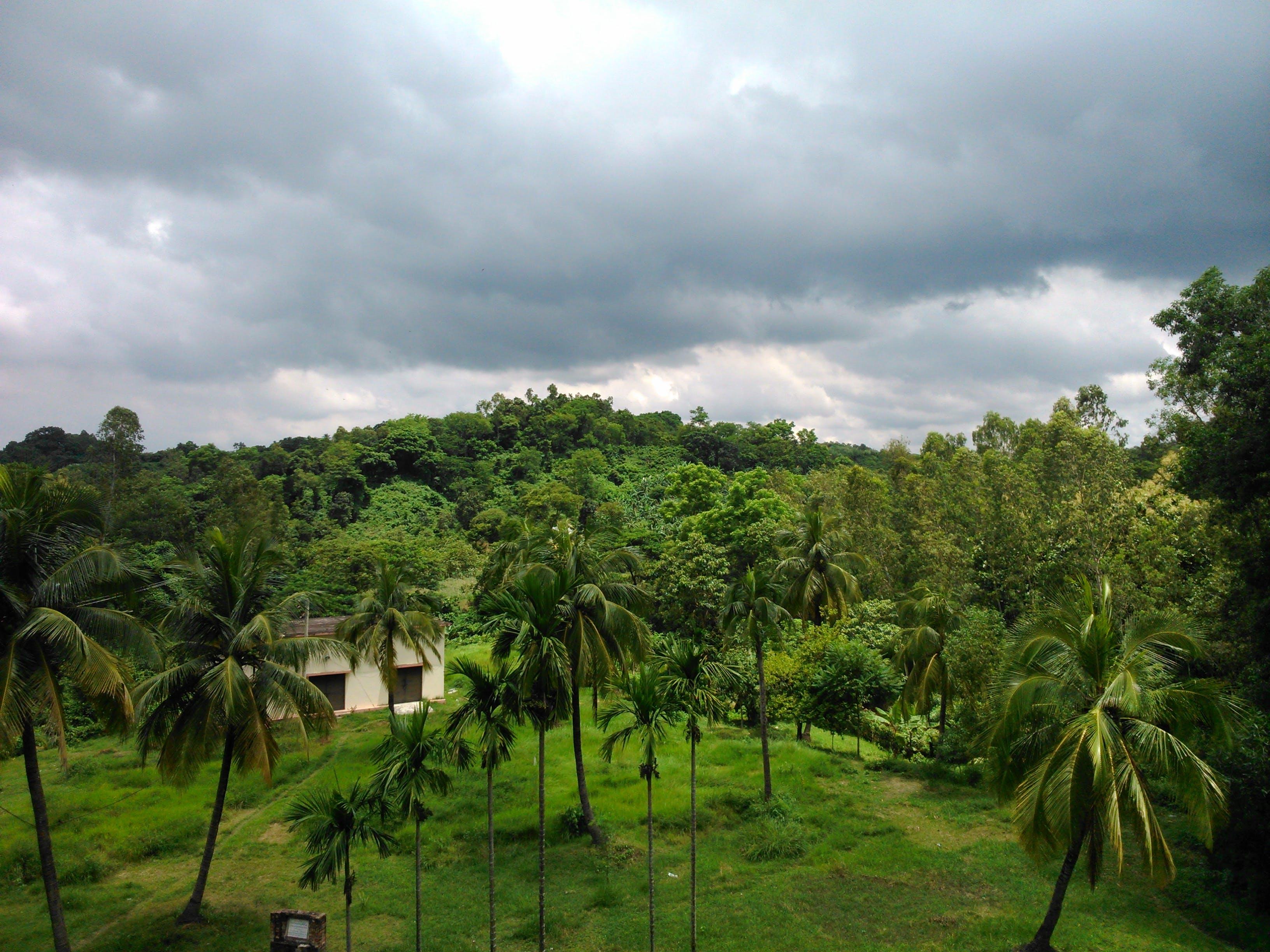 Free stock photo of cloud, coconut tree, dark green, nature photography