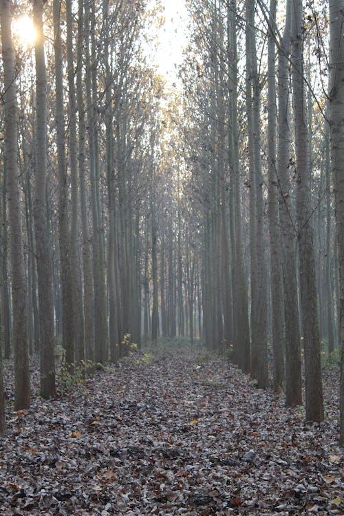 가을, 교회 점토, 나무, 나뭇잎의 무료 스톡 사진