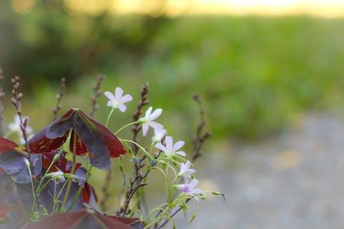 Základová fotografie zdarma na téma cesta, květiny, kytka, les