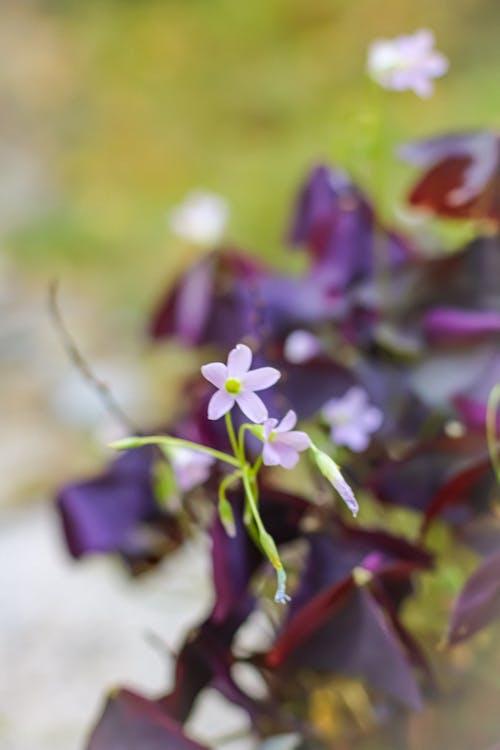 Základová fotografie zdarma na téma kvetoucí rostlina, kytka, matka příroda, příroda