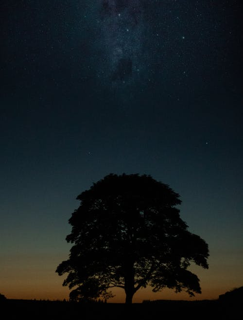Foto d'estoc gratuïta de arbre, bell cel, blues, cel