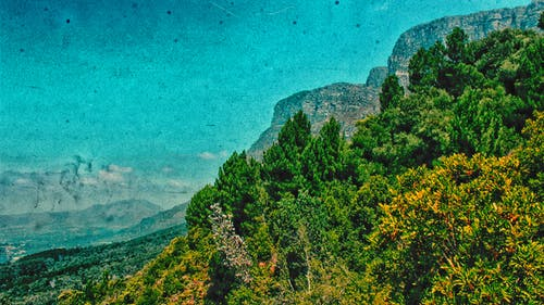 Free stock photo of blue mountains, forest, landscape, newlands