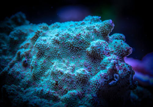 Fotobanka sbezplatnými fotkami na tému divný, koralový polyp, more, neobvyklý