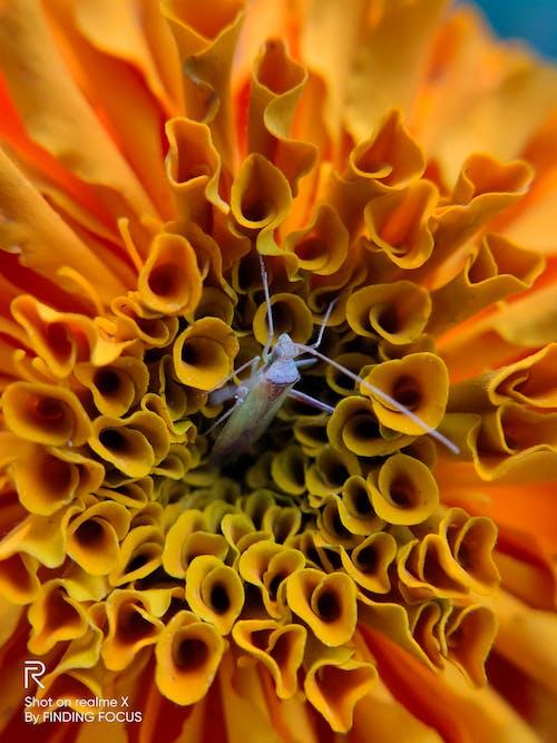 Fotos de stock gratuitas de ave del paraíso, flores bonitas, flores floreciendo, foto macro