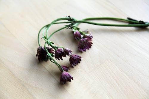 Photos gratuites de allumé, arrangement floral, arrière-plan, bois