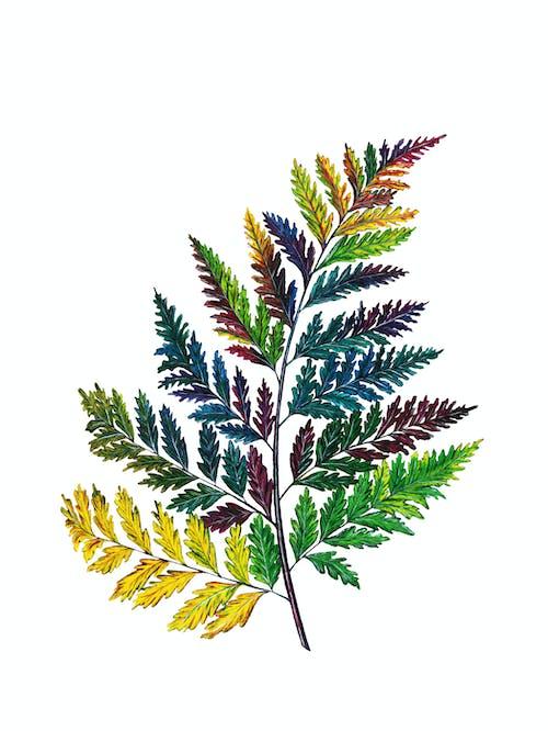 Photos gratuites de beauté dans la nature, coloré, décoration automnale, décorations
