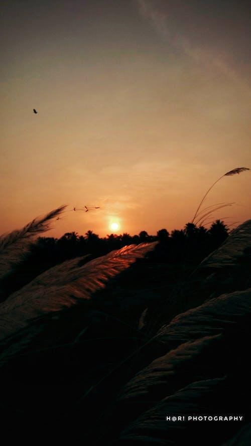 Darmowe zdjęcie z galerii z wschód słońca, zachód słońca