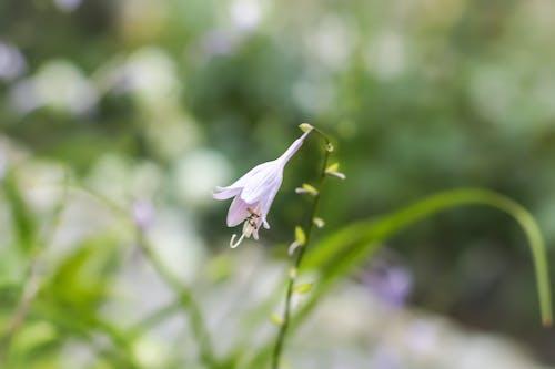 Immagine gratuita di fiore, fiori, fiori viola, fotografia della natura