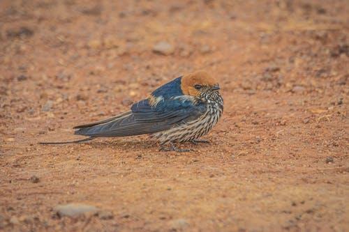 Бесплатное стоковое фото с Африка, дикая природа, животные, куст